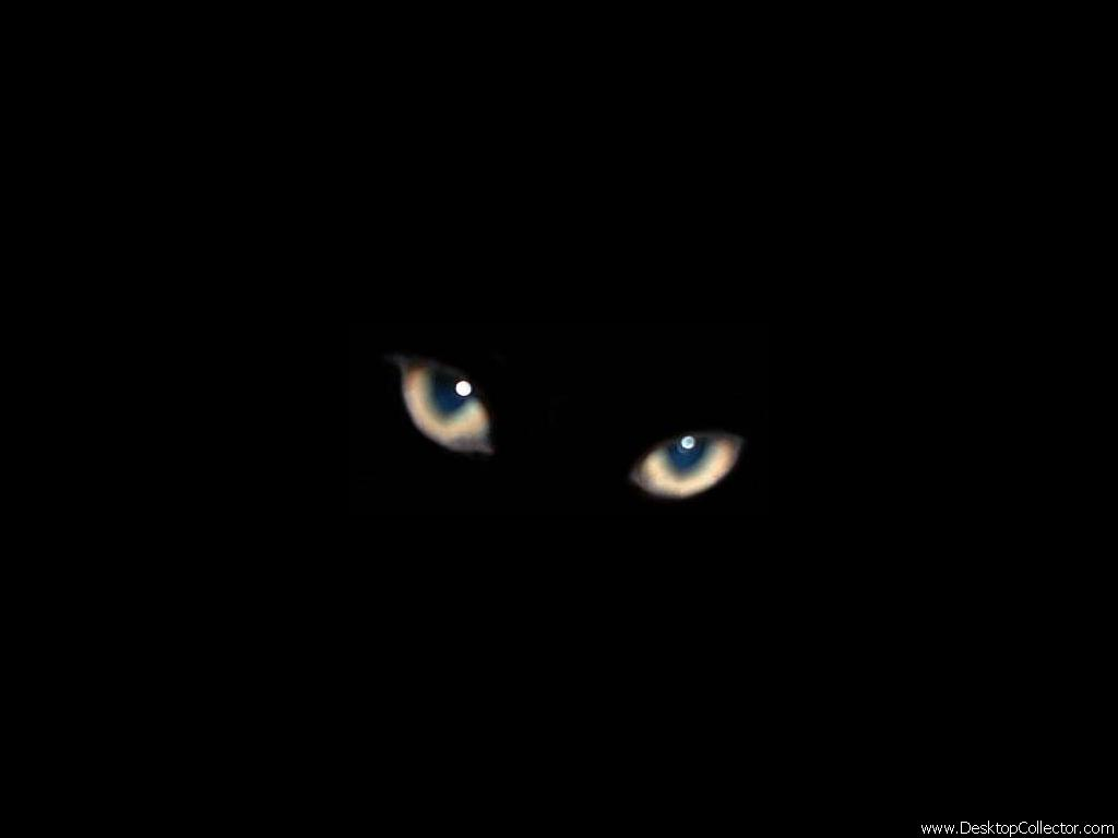 Black U0026 White Clipart: Black Cats Part 96