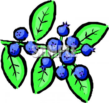 blueberries clip art clipart panda free clipart images rh clipartpanda com blueberry clip art free clipart blueberry muffin