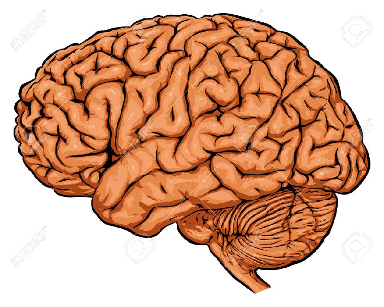 brain clipart brain clipart panda free clipart images rh clipartpanda com Thinking Brain Clip Art brain pictures clip art