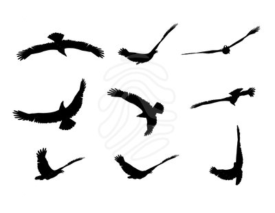 clip art fly eagle clipart panda free clipart images rh clipartpanda com flying eagle wings clipart flying eagle clipart black and white