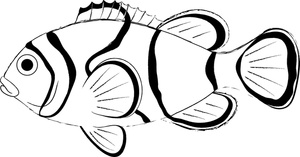 Clown fish coloring page  Clipart Panda  Free Clipart Images