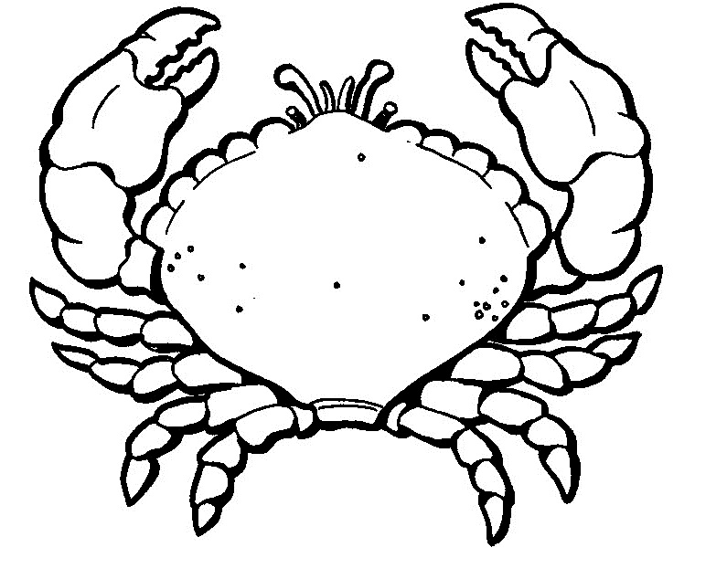 Crab Coloring Pages For Clipart Panda Free Clipart Images