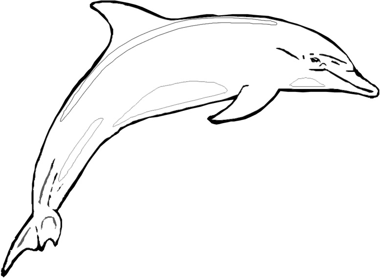 clipart info - Dolphin Coloring Page