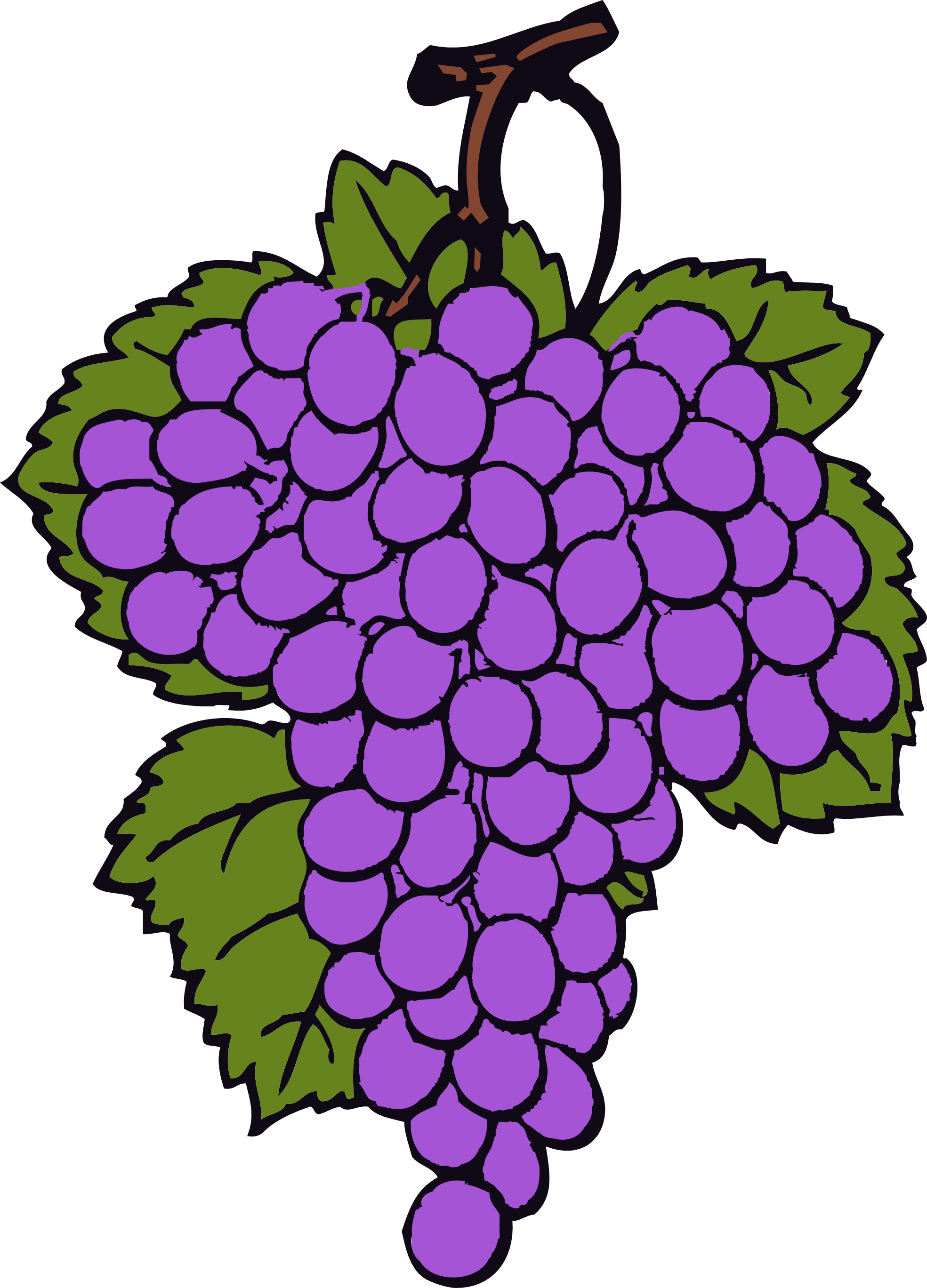 for grapes clip art clipart panda free clipart images rh clipartpanda com clipart grapes images clipart grapes black and white