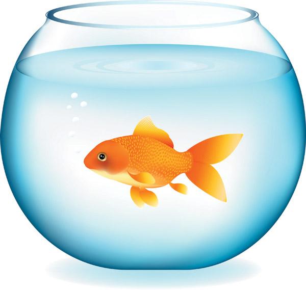 goldfish clipart clipart panda free clipart images rh clipartpanda com