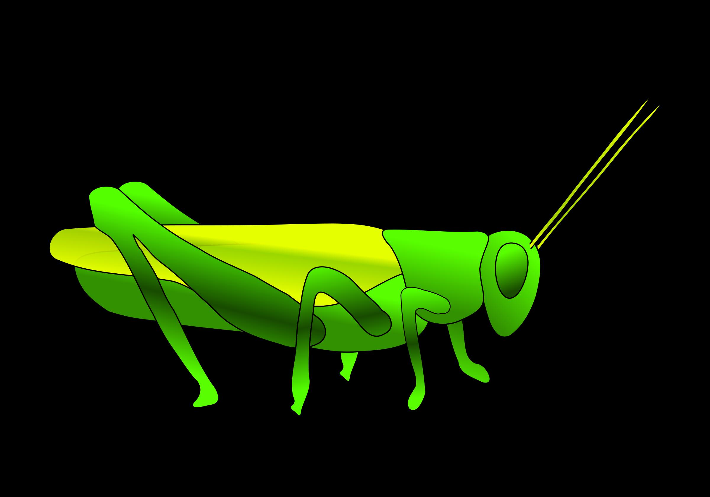 grasshopper clip art clipart panda free clipart images rh clipartpanda com grasshopper clipart black and white animated grasshopper clipart