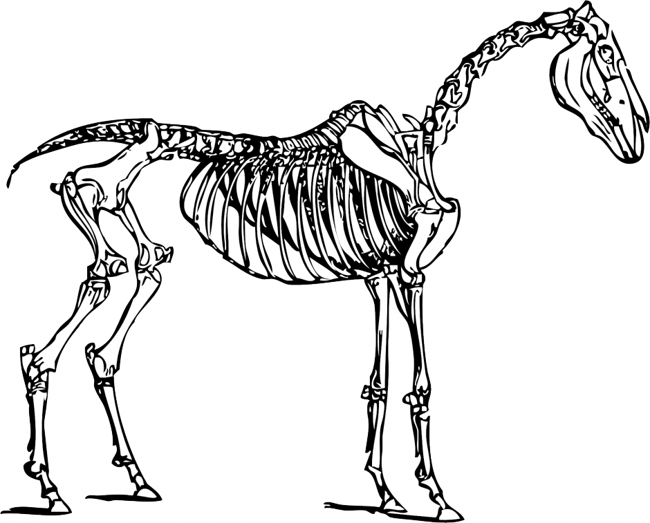Horse Skeleton Coloring Book | Clipart Panda - Free Clipart Images