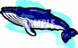 humpback whale clip art clipart panda free clipart images rh clipartpanda com