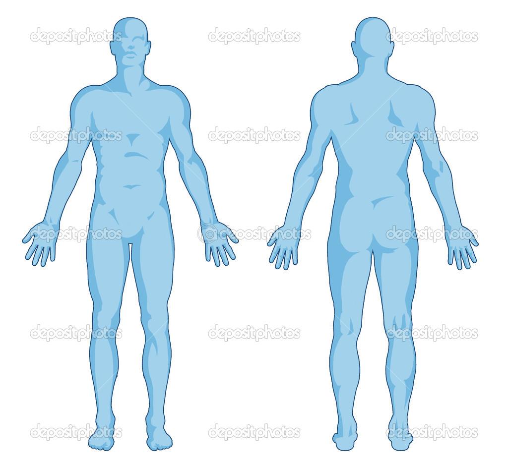 Male body shapes - human body | Clipart Panda - Free Clipart