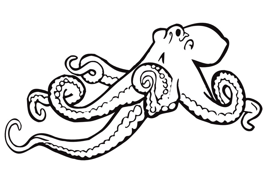 Octopus Coloring Page Clipart Panda Free Clipart Images