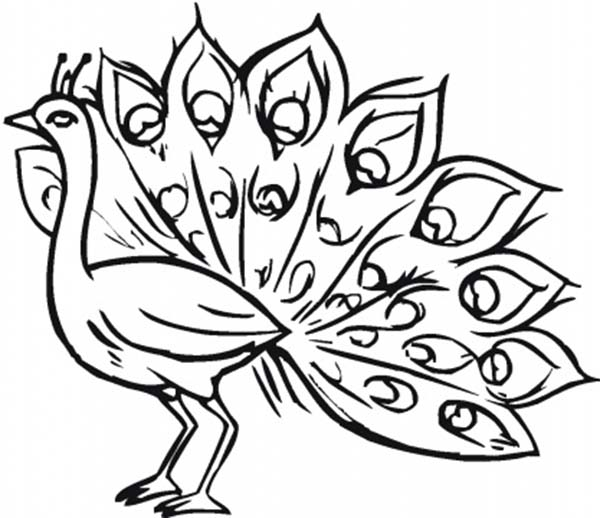 Of Peacock Coloring Page