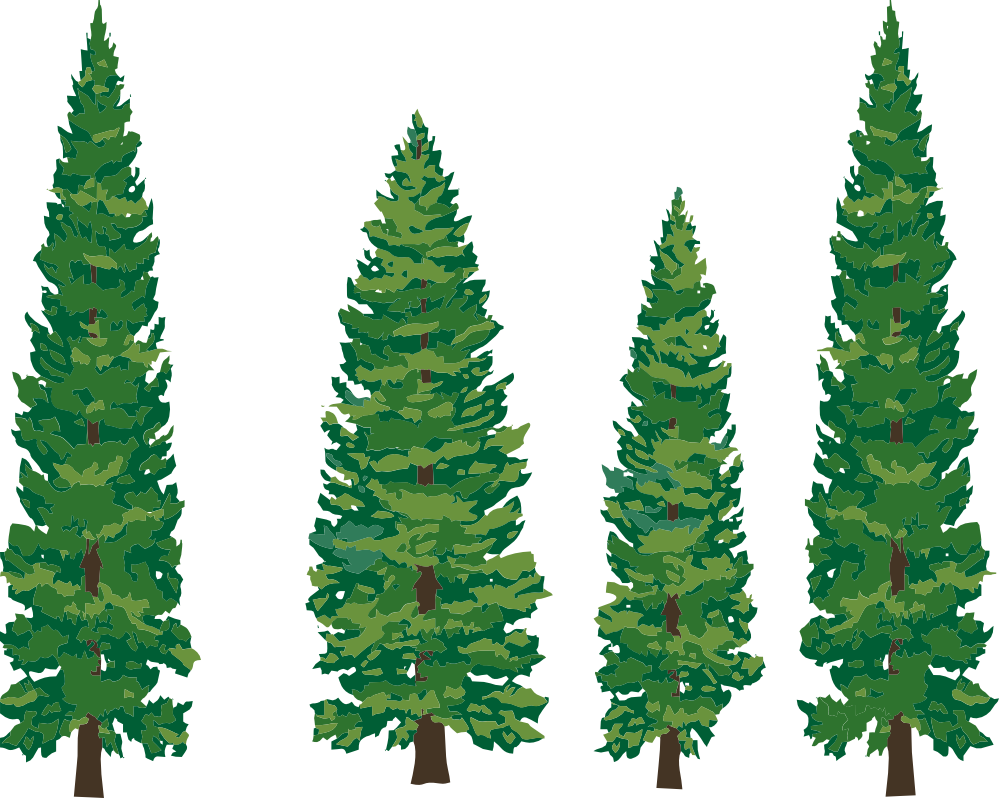 Pine Trees Coloring Book   Clipart Panda - Free Clipart Images