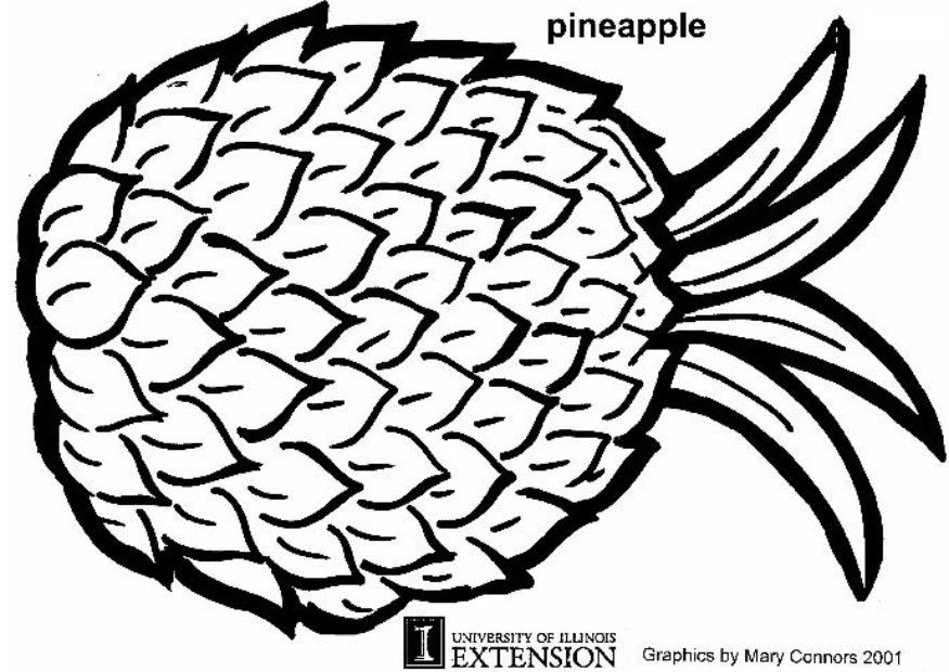Pineapple Coloring Page   Clipart Panda - Free Clipart Images