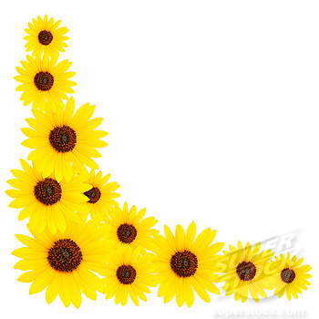sunflower border clipart panda free clipart images rh clipartpanda com Sunflower Border Clip Art No White Sunflower Clip Art Borders & Dried Corn
